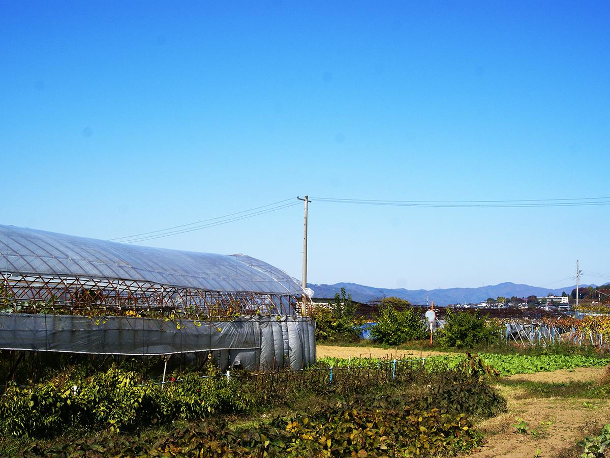 田尻農園001